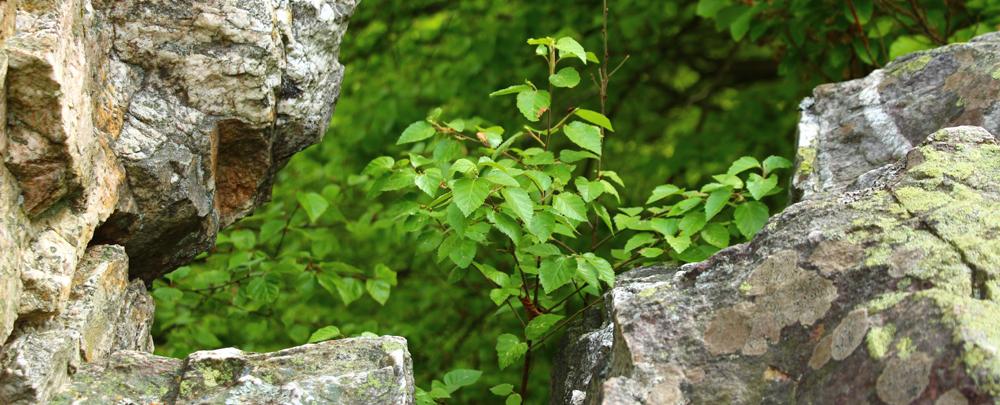Ringkopf im Nationalpark Hunsrück