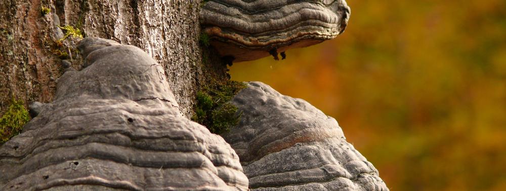 Baumpilze im Hunsrückwald